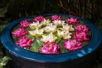 Thailändisch traditionelle Blumenschale mit Lotusblüten