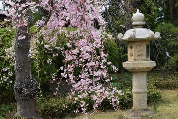Stone lantern and flower inthe Japanese garden