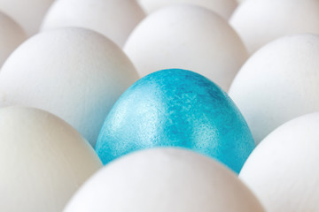 Blue easter egg among white chicken eggs in cardboard tray closeup
