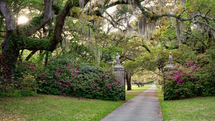 Live Oaks and Azalea in Spring - South Carolina