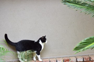 black and white cat walking on a ledge