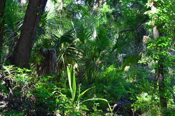 Lush Jungle Tropical Palms Green Background Flora and Fauna Rainforest