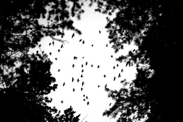 Photo flight of a flock of birds