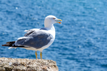 portrait of a seagull standing