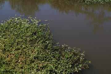 swamp, hot summer day landscape swamps, different backgrounds