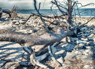 Jekyll Island bare trees on the beach, Georgia