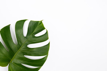 Tropical palm leaf on white background. Flat lay, top view. Summer background.