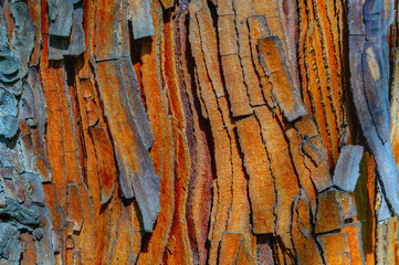 BARK PATTERNS AND TEXTURES. Macro of bark on an ancient cedar tree.