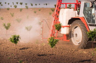 Tractor spraying pesticides on cherry orchard
