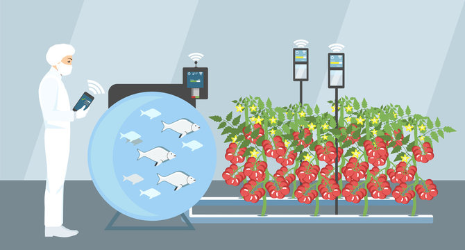 Growing plants in the greenhouse. Smart farm with wireless control. Eco farm with aquaponics system of planting vegetables. Vector illustration.