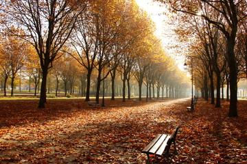 Papiers peints Marron Les feuilles d'automne emportées par le vent