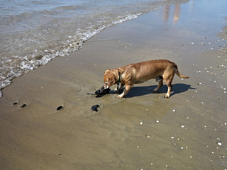 Dog and mussels