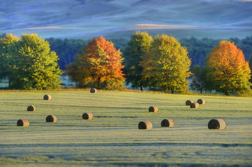 HAYBALES and autumn colours in the Underberg countryside, Kwazulu Natal, South Africa.