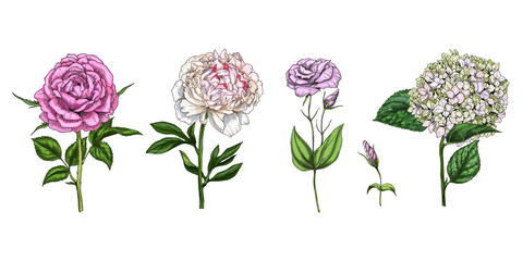 Set of colorful blooming flowers and leaves isolated on white background. Rose, peony, phlox and eustoma. Botanical vector. Floral elements for your design.