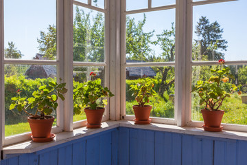 Geraniums flowers in a window of a cottage