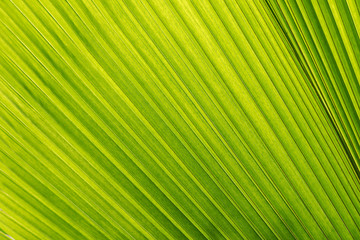 green tropical jungle palm leaf background, wallpaper