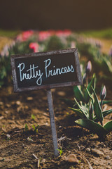 Close up of a pretty princess chalkboard sign with tulips in background