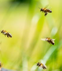 Bienenanflug