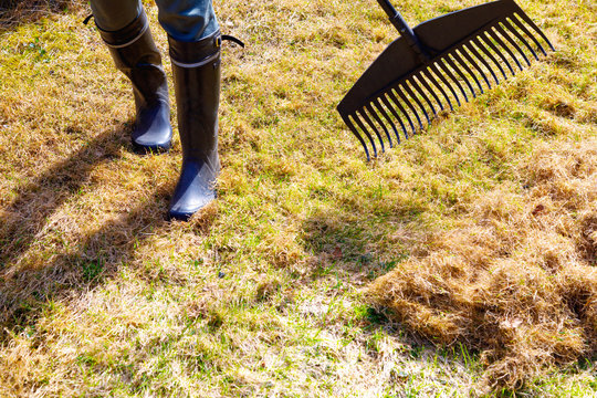 Garden cleaning. Raking dry grass in the garden in early spring
