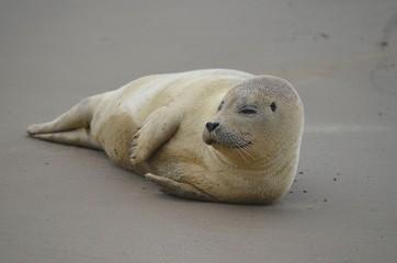 A Seal in Denmark
