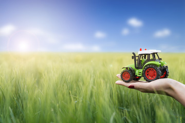 Wall Mural - Agriculture and farming concept. Farmer holding plastic tractor toy in the green wheat field. Machinery and vehicles for harvest and cultivation.