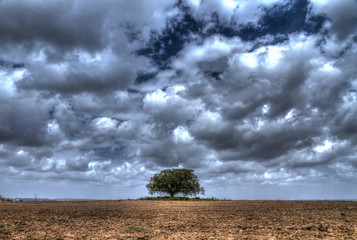 lonely tree Standing in the middle of a field in front of winter cloudy sky