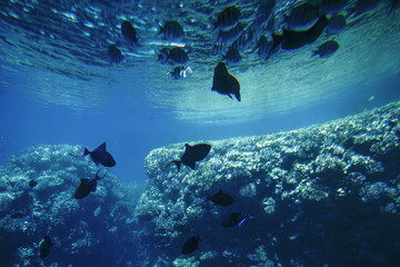 Spoed Foto op Canvas Koraalriffen Underwater life of the Red Sea,, - fishes and carals, Egypt