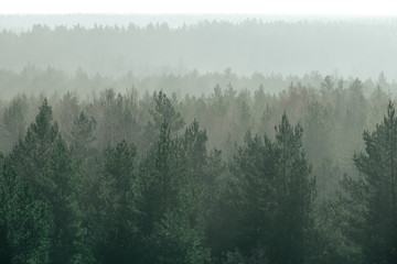panoramic view of misty forest