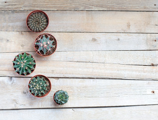 Succulents, cacti on a light gray wooden background, Transplant, gardening, hobby