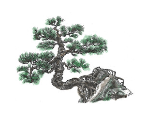 Pine on the rock.