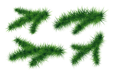 Set of fir branches. Symbol of  New Year.