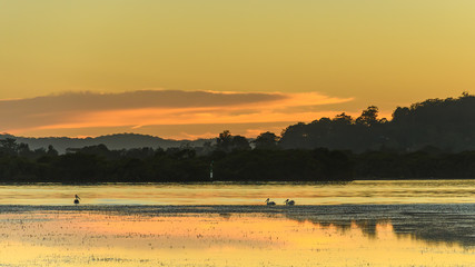 Sunrise Waterscape - Pretty in Pastels with Pelicans