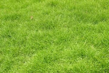 緑の芝生 自然 イメージ エコ