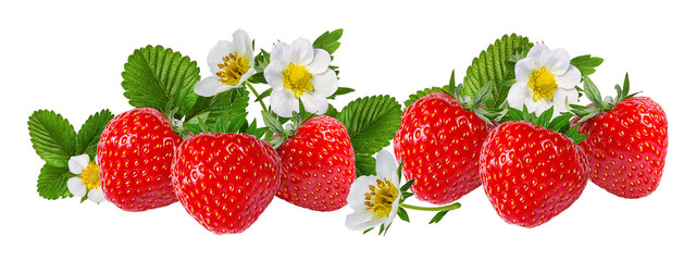Fototapete - strawberry and strawberry flower isolated on white background