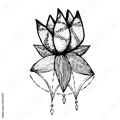 Tattoo Black And White Sketch Lotus Flower Vector Illustration