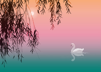 background with white swan and willow branches, vector illustration