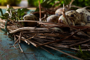 Nest with quail eggs on the blue background, top view, close-up, selective focus