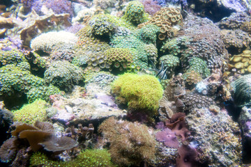 Photo of a tropical fish on a coral reef in aquarium