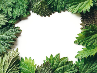 Frame of nettle leaves, copy space