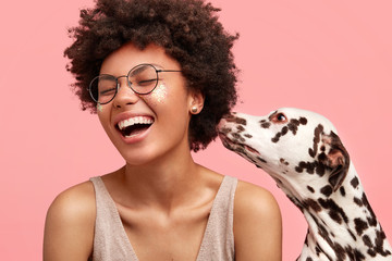 Happy overjoyed African American female feels glad as dalmatian dog smells her and shows devotion, isolated on pink background. Cheerful dark skinned woman with favourite pet. People and animals