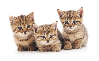 Three small kittens.