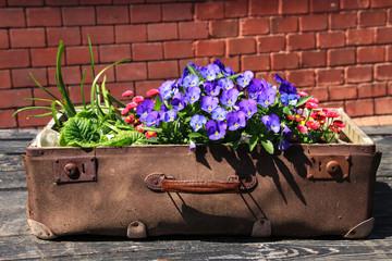 Blumenschale, Koffer, Verreisen im Frühling