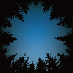 vector night sky with stars and dark forest trees
