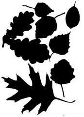 Silhouettes of autumn leaves in a black color