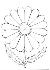 Outline drawing of a flower for coloring