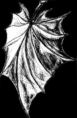 Decorative drawing of a leaf of a tree in graphic style on a black background