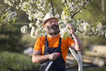 A man in a blooming garden.