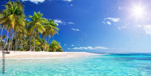 Fototapete Palm Beach In Tropical Paradise - Guadalupe Island -  Caribbean