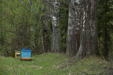 apiary in the distant wood
