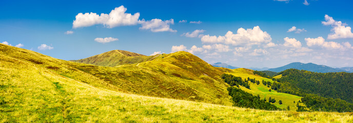Canvas Prints Melon panorama of Krasna mountain ridge. beautiful landscape with grassy slopes and forested hill under the blue summer sky with fluffy clouds. location Carpathian mountains, Ukraine